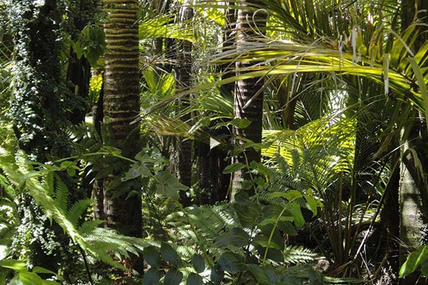 Guayusa und Drachenblut – Die Naturwunder aus dem Amazonas in Ecuador