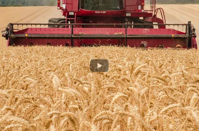Biokampfstoffe und pestizidfreie Landwirtschaft
