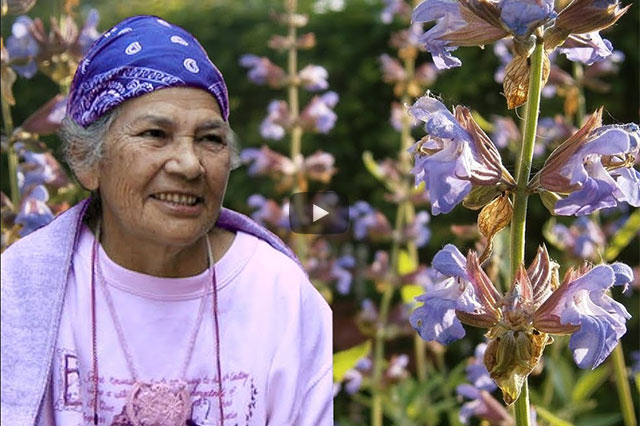 Heilkraft der Pflanzen – ein schamanisches Pflanzenlexikon von Efigenia Barrientos