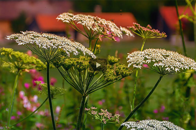 Damanhur und die Pflanzenkommunikation. Verbotene wissenschaftliche Ergebnisse.