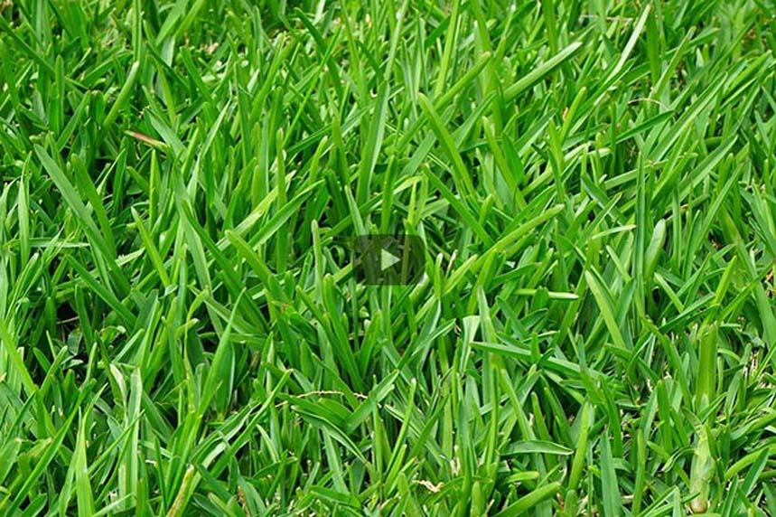 Grassaft – das grüne Lebenselixier