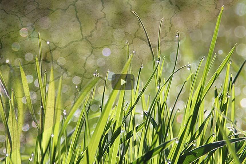 Grünes Gras statt trockener Erde: Begrünung & Wassereinsparung mit Raumenergie