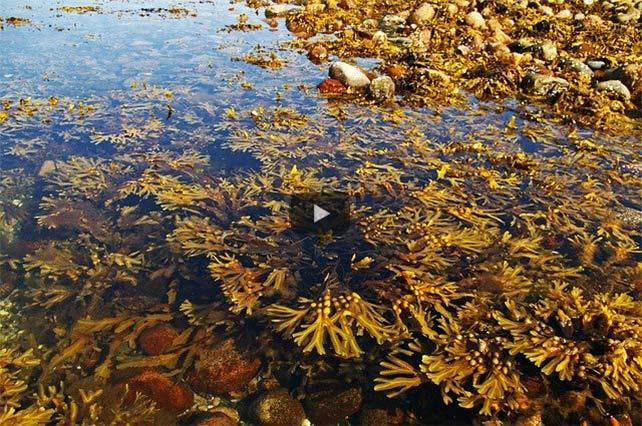 Mit der Kraft von Meeresalgen Sprit & Geld sparen und die Umwelt entlasten